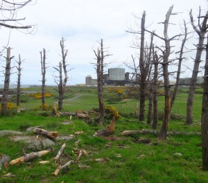 dead-trees-2013-05-22 11.17.52-cropped