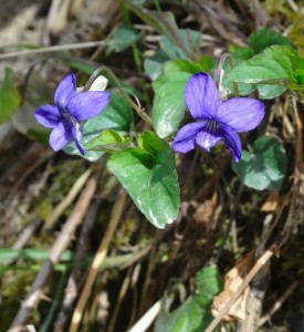 violet-2013-05-04 12.02.04-cropped